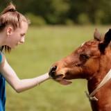 Rendkívüli felvételi eljárás – lovastúra vezető