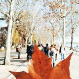 BWM SZAKGIMNÁZIUM – Projekthét kihelyezett tanóra Balatonfüred